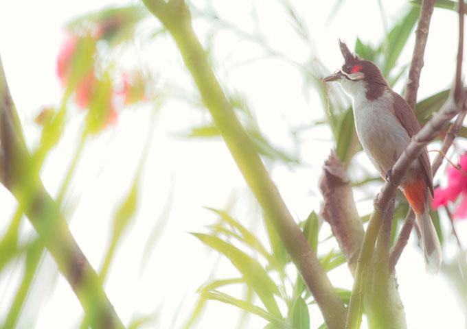 Mauritius Vogel im Geäst