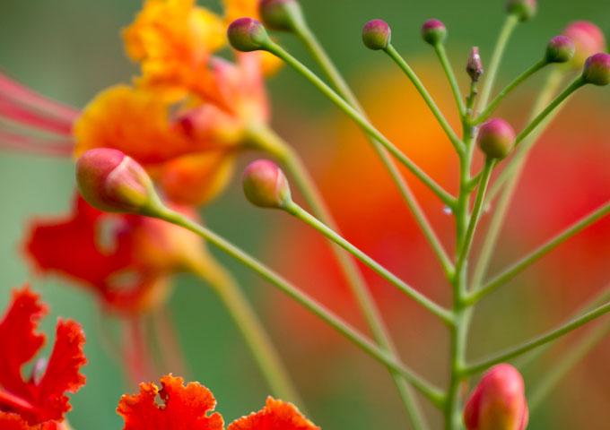 Detailfoto Flower rot und grün