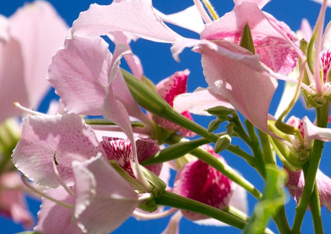 Blume Nahaufnahme